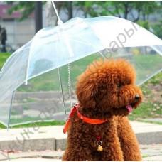 Зонт с поводком для собаки