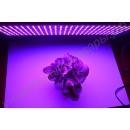 """LED grow панель """"Поллукс"""" для выращивания рассады, цветов, комнатных растений, гарантийное обслуживание - 1 год"""