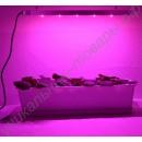 """Освещение теплицы на базе эффективных 3Вт фитосветодиодов """"Фомальгаут"""", гарантийное обслуживание - 1 год"""